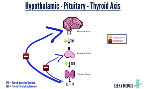 Top 7 advices for Hypothyroidism Patients